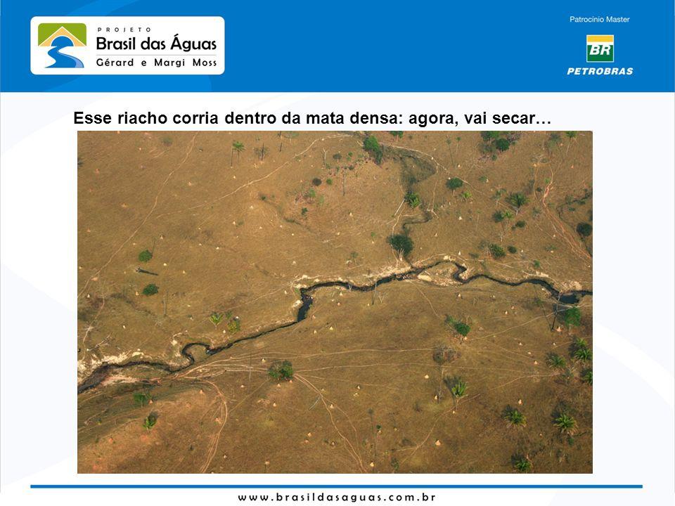 Esse riacho corria dentro da mata densa: agora, vai secar…