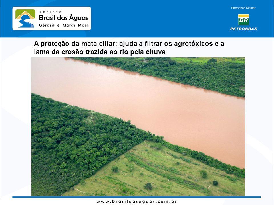 A proteção da mata ciliar: ajuda a filtrar os agrotóxicos e a lama da erosão trazida ao rio pela chuva