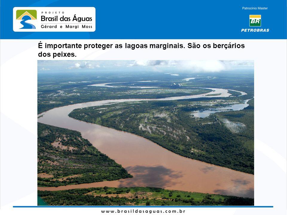 É importante proteger as lagoas marginais. São os berçários