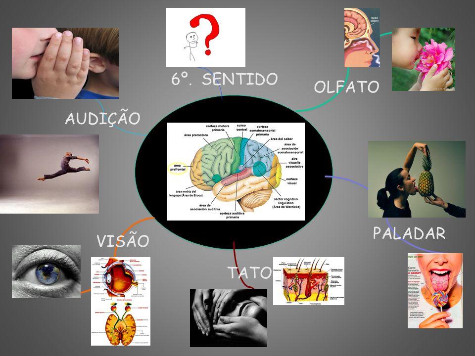 6º. SENTIDO OLFATO AUDIÇÃO PALADAR VISÃO TATO