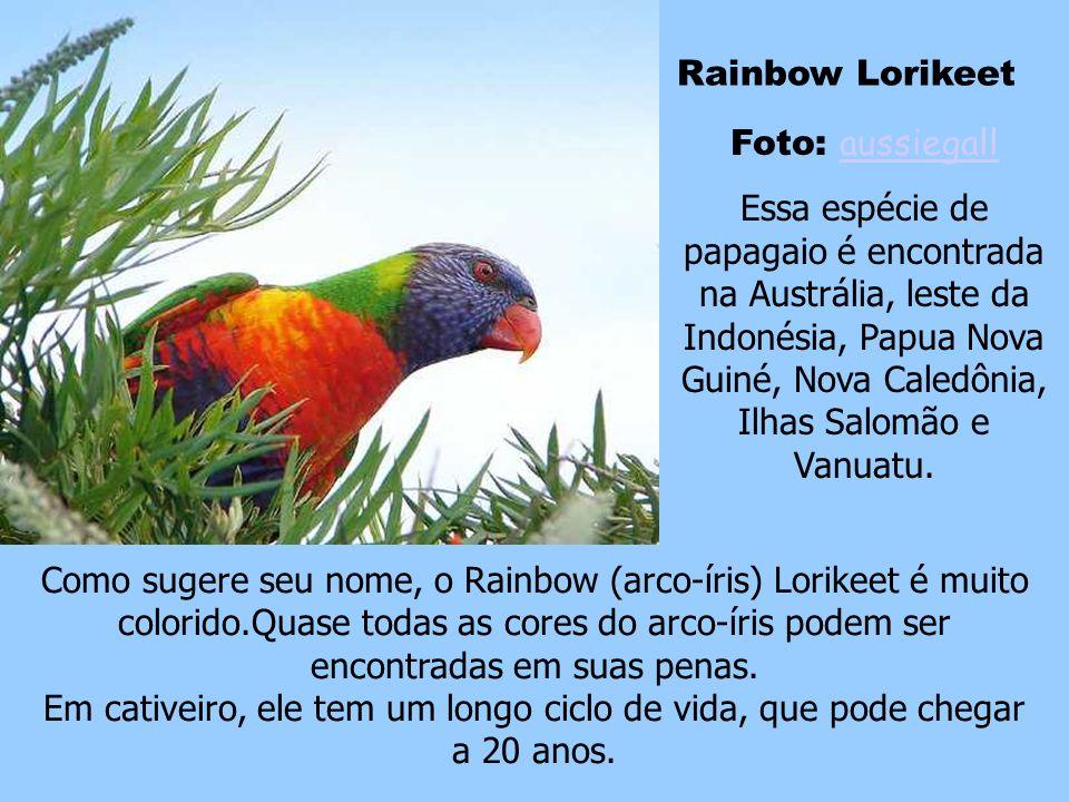 Rainbow Lorikeet Foto: aussiegall.