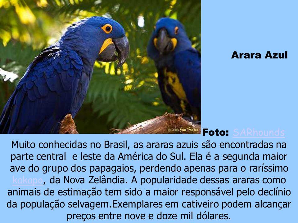 Arara Azul Foto: SARhounds.