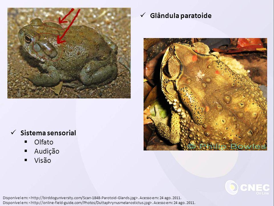 Glândula paratoide Sistema sensorial Olfato Audição Visão