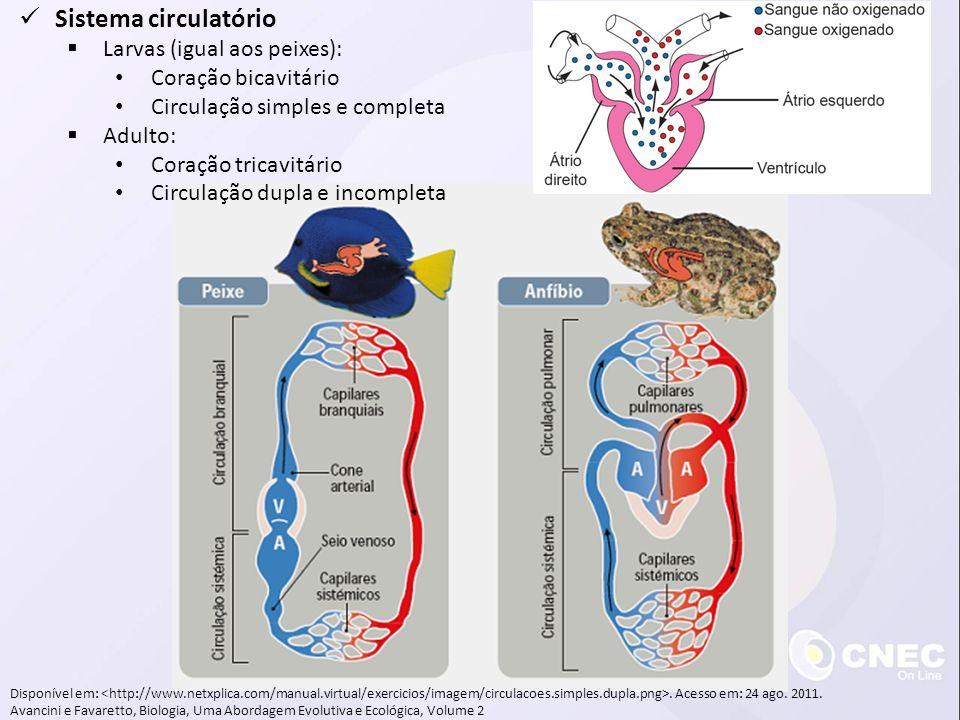 Sistema circulatório Larvas (igual aos peixes): Coração bicavitário