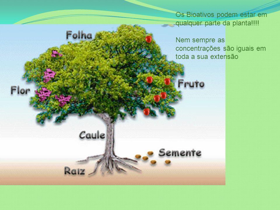 Os Bioativos podem estar em qualquer parte da planta!!!!