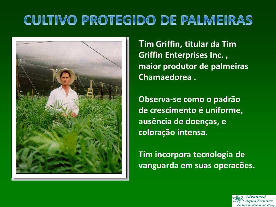 CULTIVO PROTEGIDO DE PALMEIRAS
