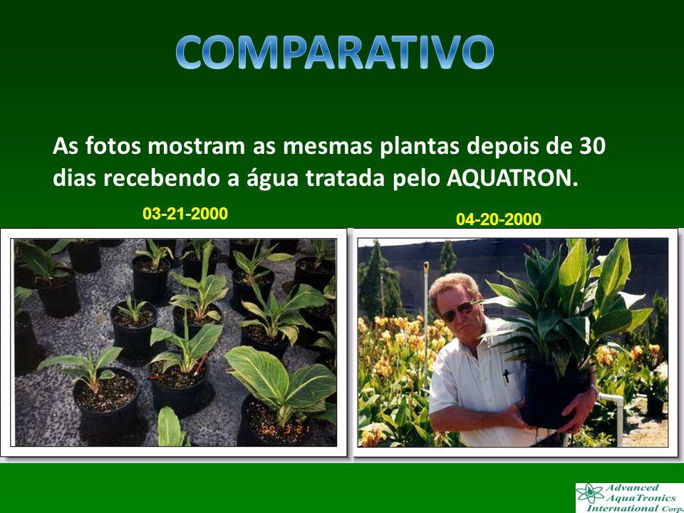COMPARATIVO As fotos mostram as mesmas plantas depois de 30 dias recebendo a água tratada pelo AQUATRON.