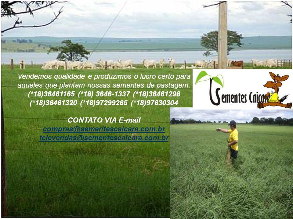 Vendemos qualidade e produzimos o lucro certo para aqueles que plantam nossas sementes de pastagem.