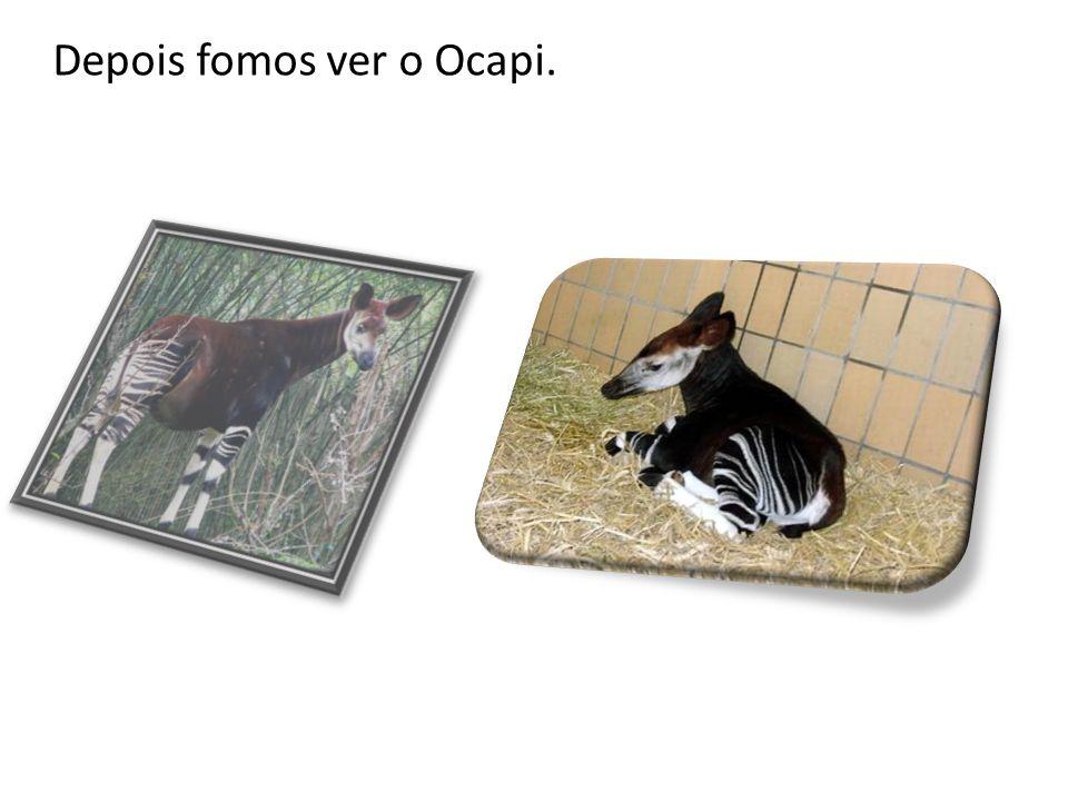 Depois fomos ver o Ocapi.