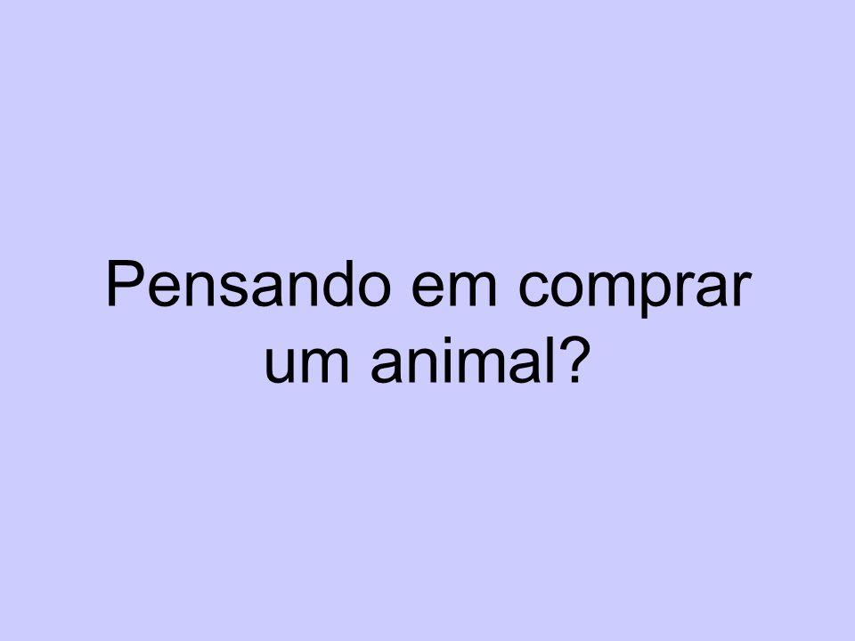 Pensando em comprar um animal