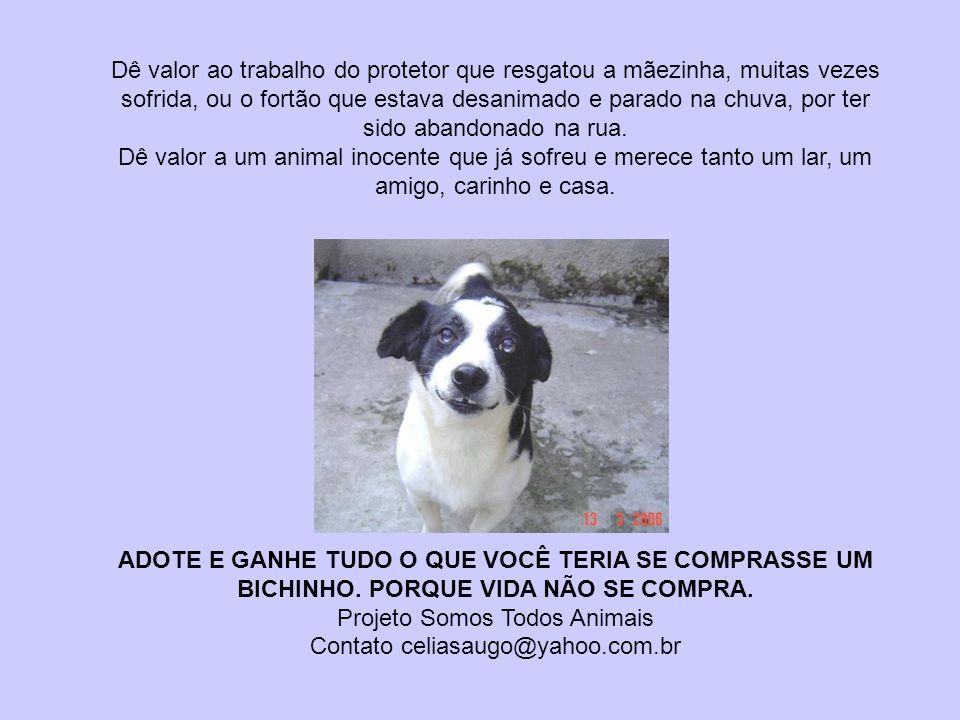 Projeto Somos Todos Animais Contato celiasaugo@yahoo.com.br
