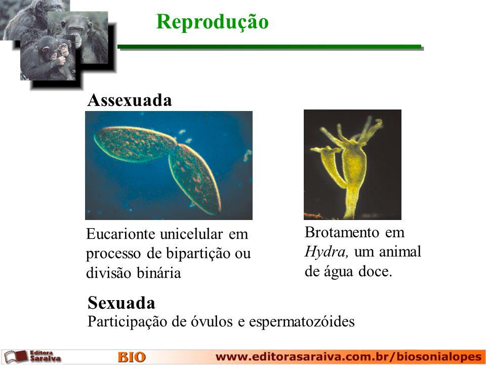 Participação de óvulos e espermatozóides