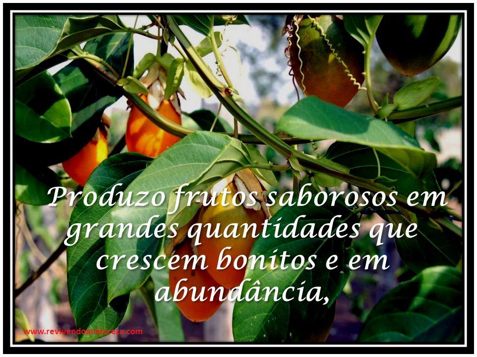 Produzo frutos saborosos em grandes quantidades que crescem bonitos e em abundância,