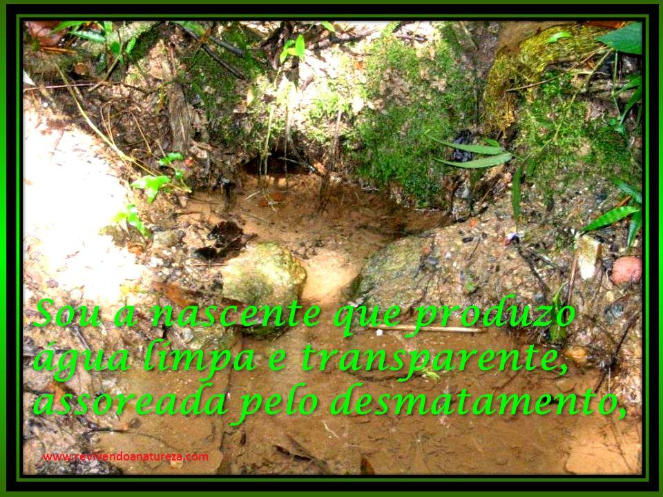 Sou a nascente que produzo água límpa e transparente, assoreada pelo desmatamento,