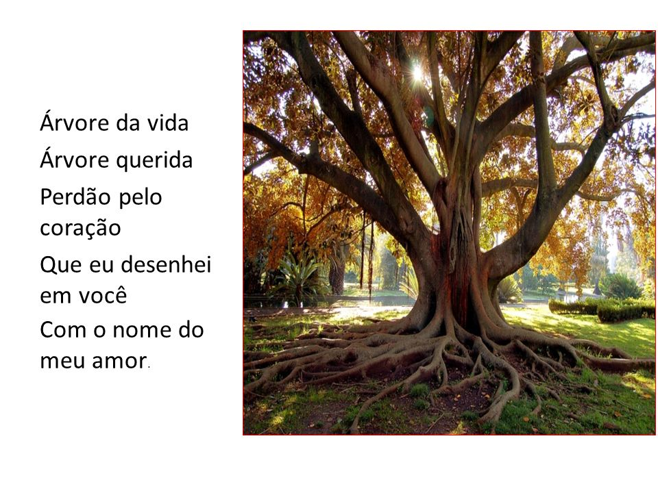 Árvore da vida Árvore querida. Perdão pelo coração.