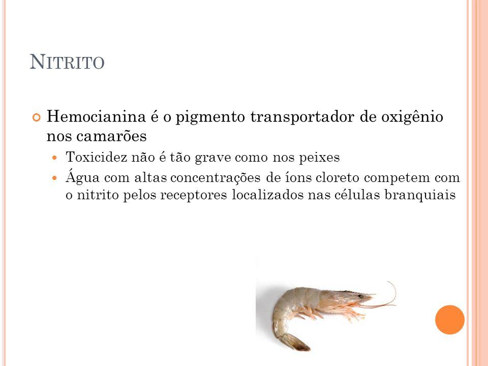 Nitrito Hemocianina é o pigmento transportador de oxigênio nos camarões. Toxicidez não é tão grave como nos peixes.