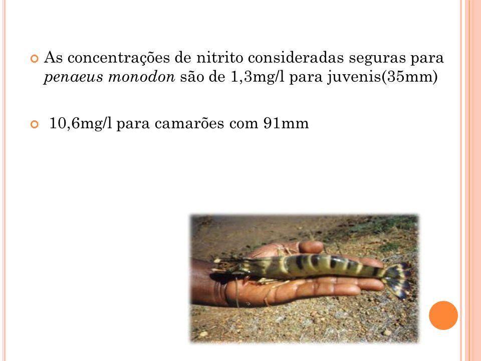 As concentrações de nitrito consideradas seguras para penaeus monodon são de 1,3mg/l para juvenis(35mm)