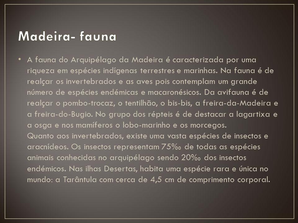 Madeira- fauna