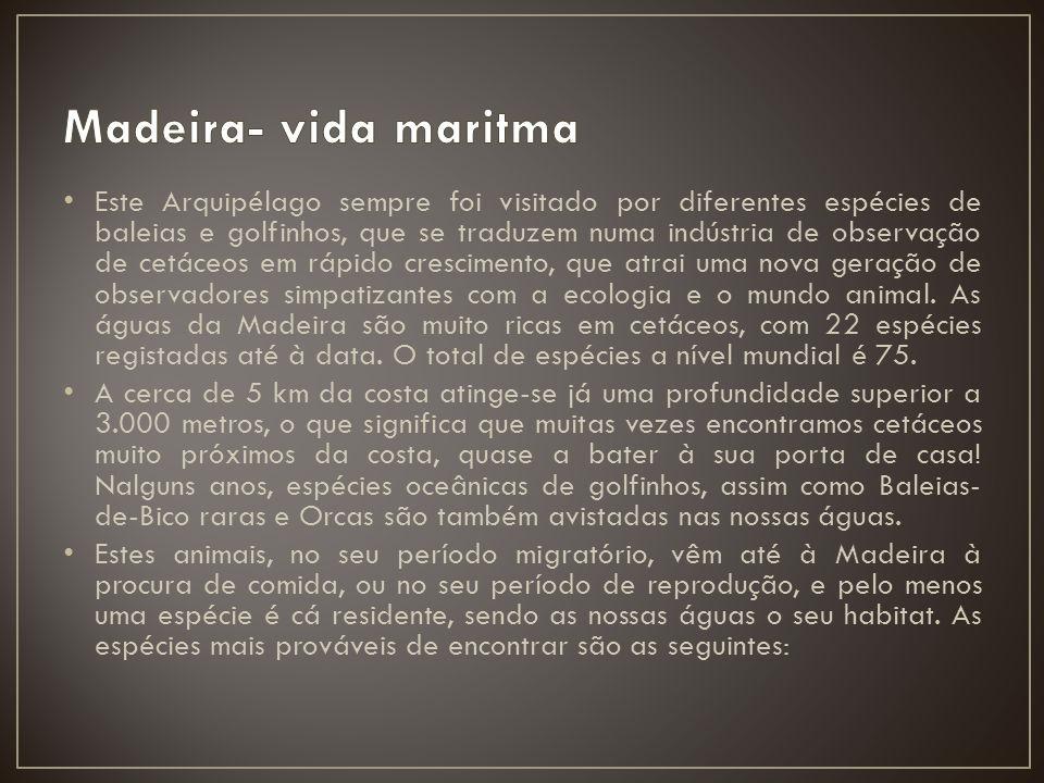Madeira- vida maritma