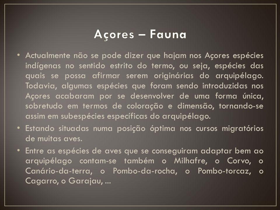 Açores – Fauna
