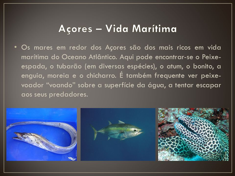 Açores – Vida Marítima