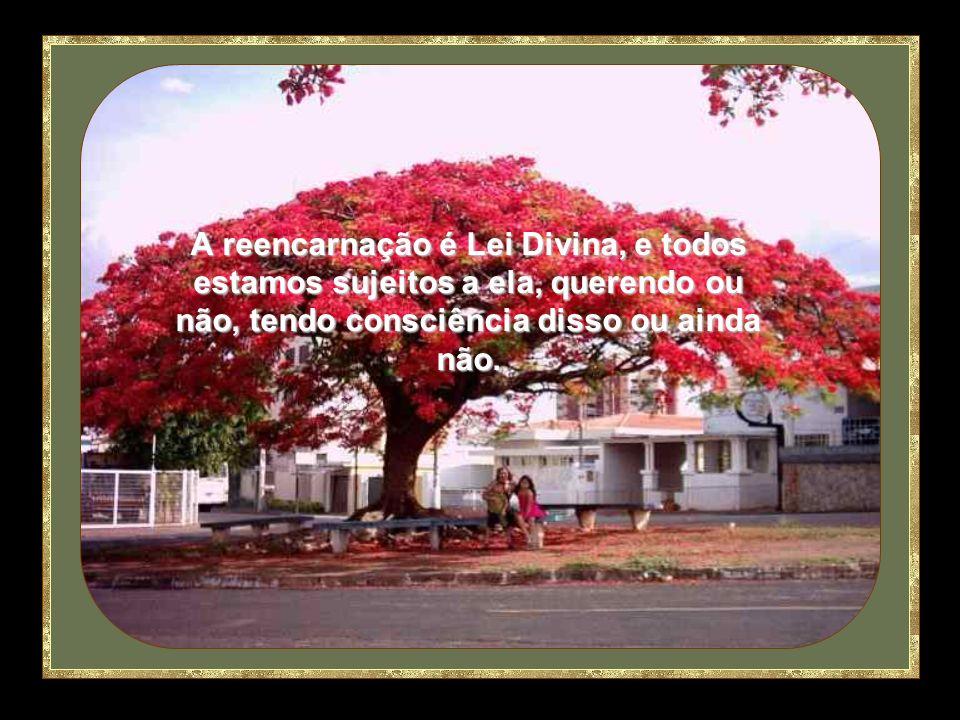 A reencarnação é Lei Divina, e todos estamos sujeitos a ela, querendo ou não, tendo consciência disso ou ainda não.