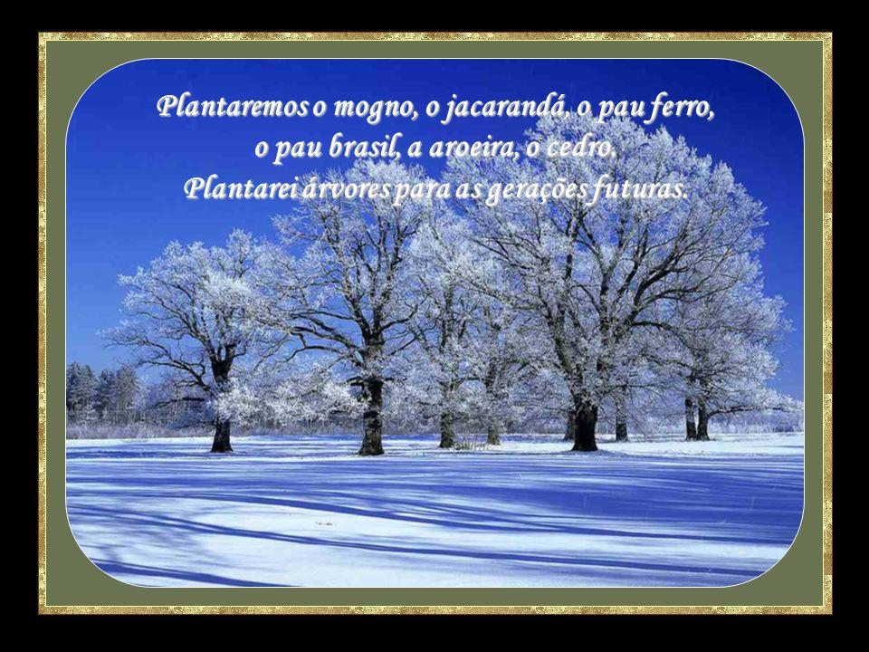 Plantaremos o mogno, o jacarandá, o pau ferro, o pau brasil, a aroeira, o cedro.
