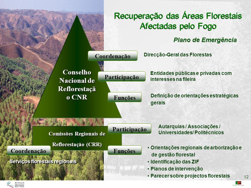 Recuperação das Áreas Florestais Afectadas pelo Fogo