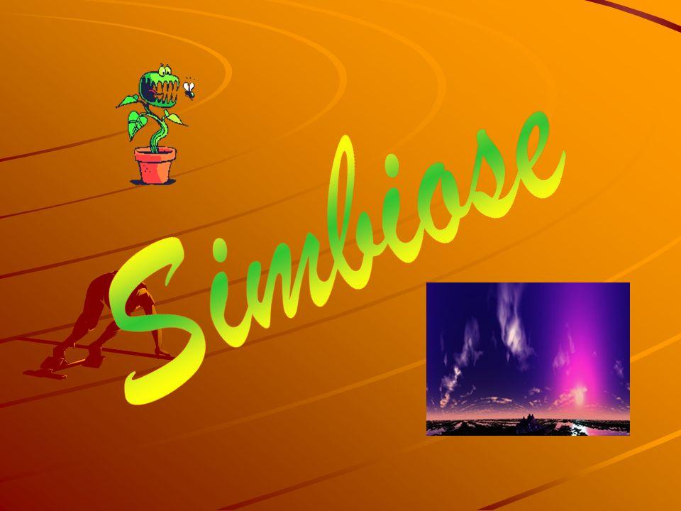 Simbiose