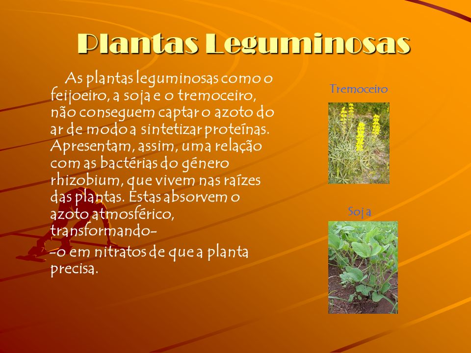 Plantas Leguminosas