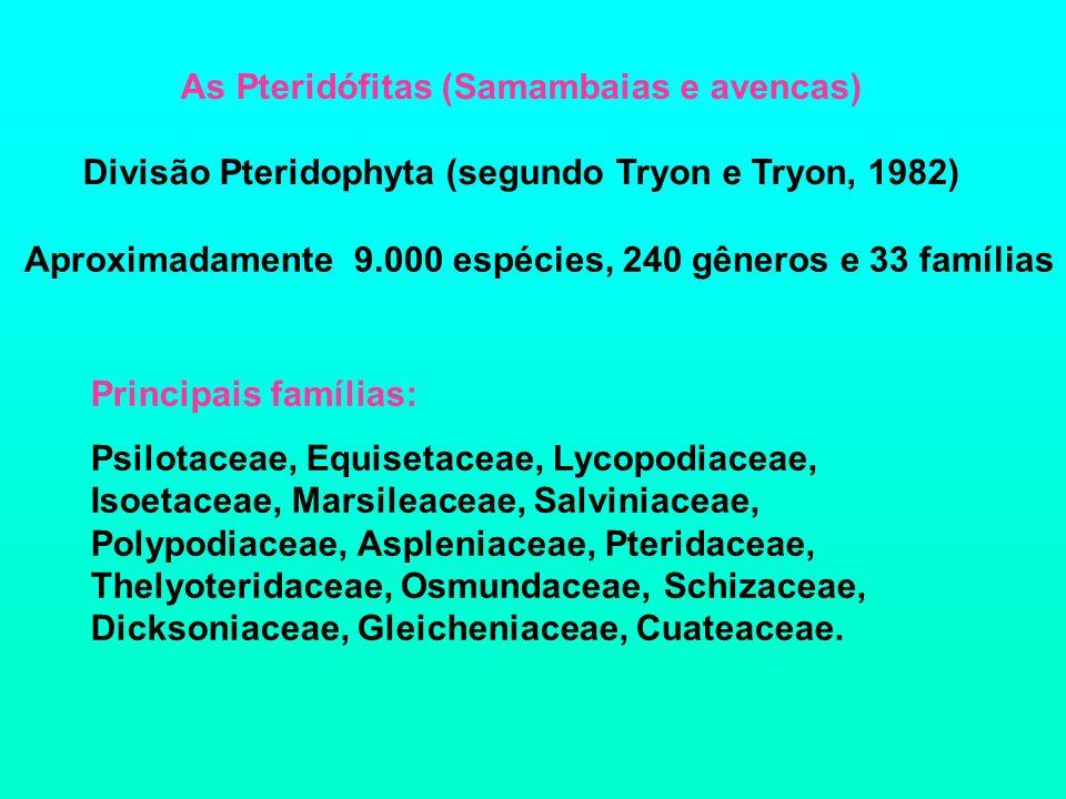 As Pteridófitas (Samambaias e avencas)