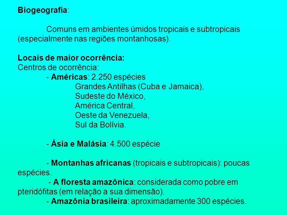 Biogeografia: Comuns em ambientes úmidos tropicais e subtropicais (especialmente nas regiões montanhosas).