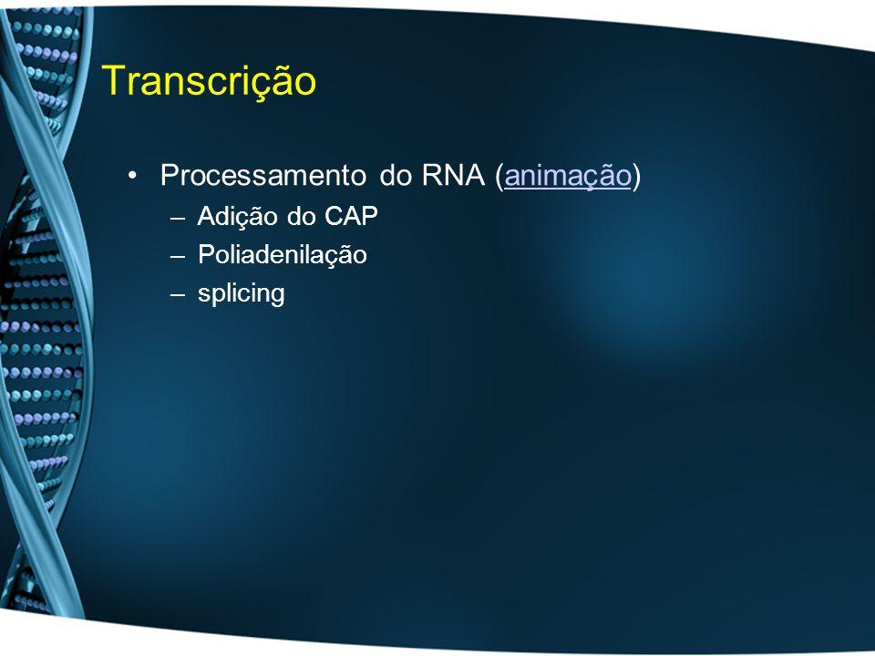 Transcrição Processamento do RNA (animação) Adição do CAP