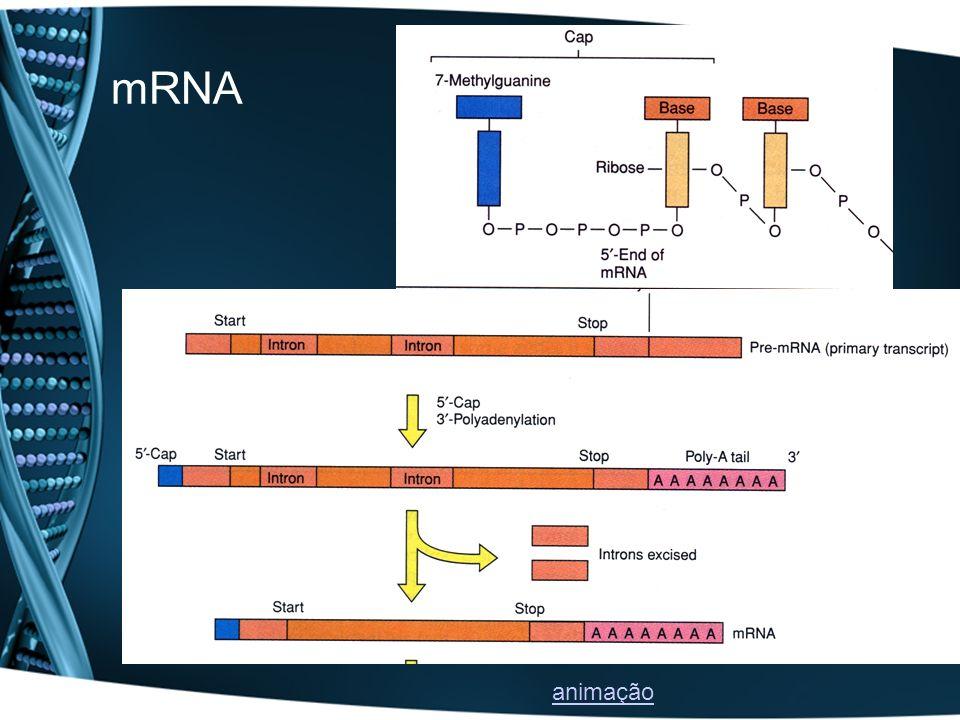 mRNA animação