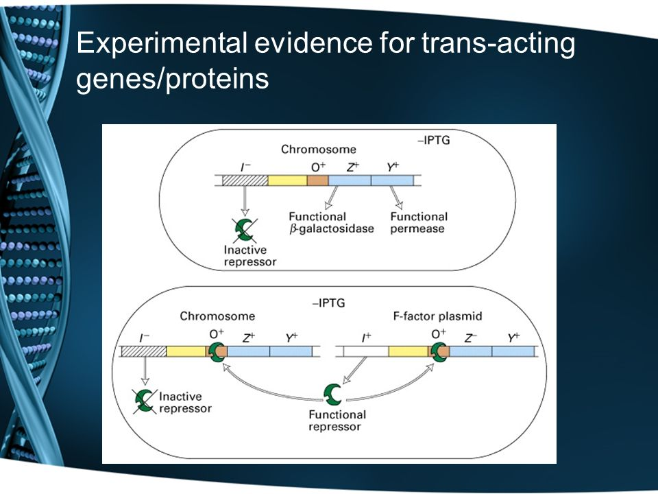 Experimental evidence for trans-acting genes/proteins