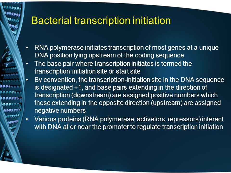Bacterial transcription initiation