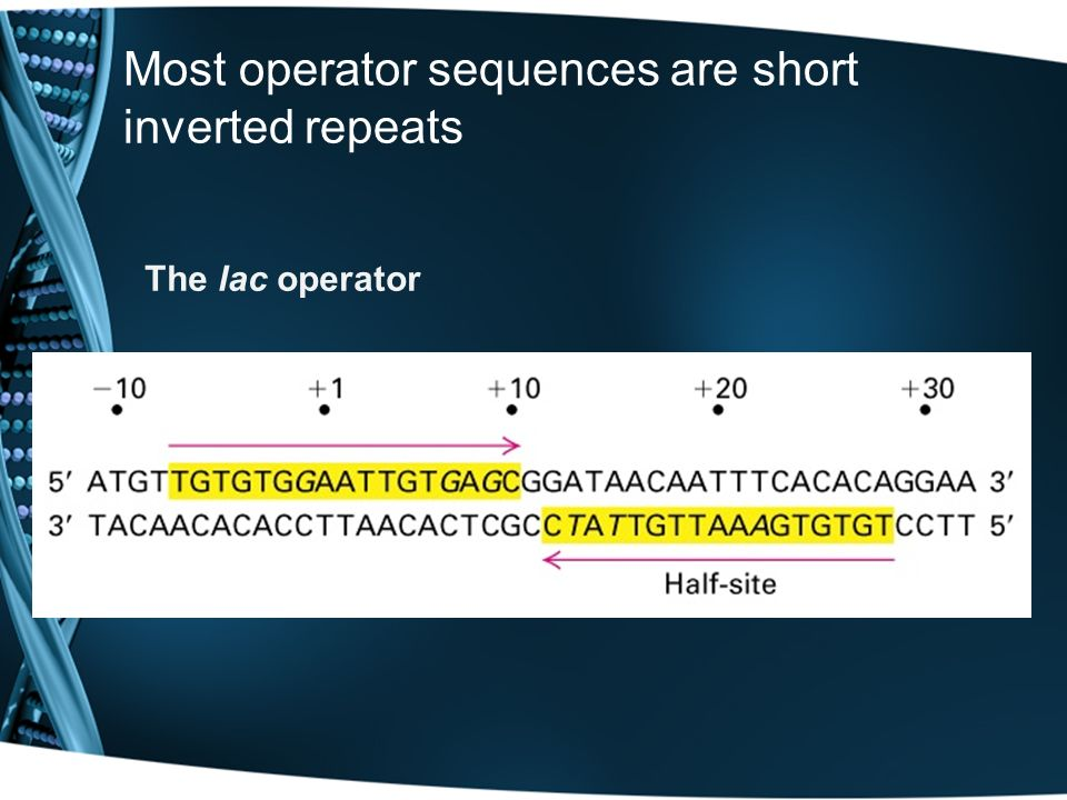 Most operator sequences are short inverted repeats