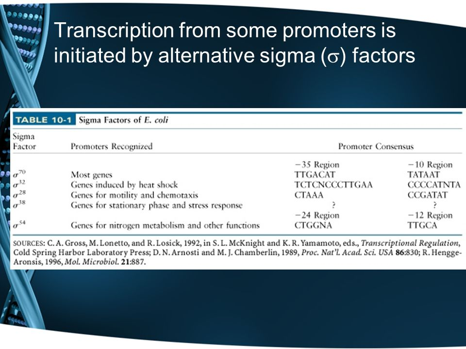 Transcription from some promoters is initiated by alternative sigma () factors