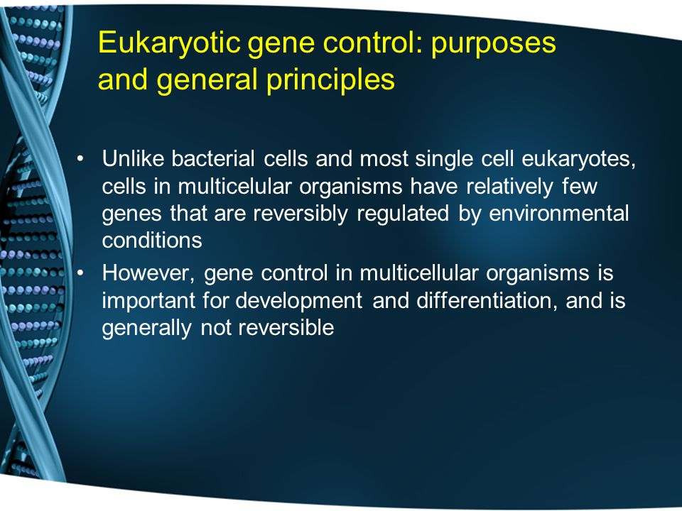 Eukaryotic gene control: purposes and general principles
