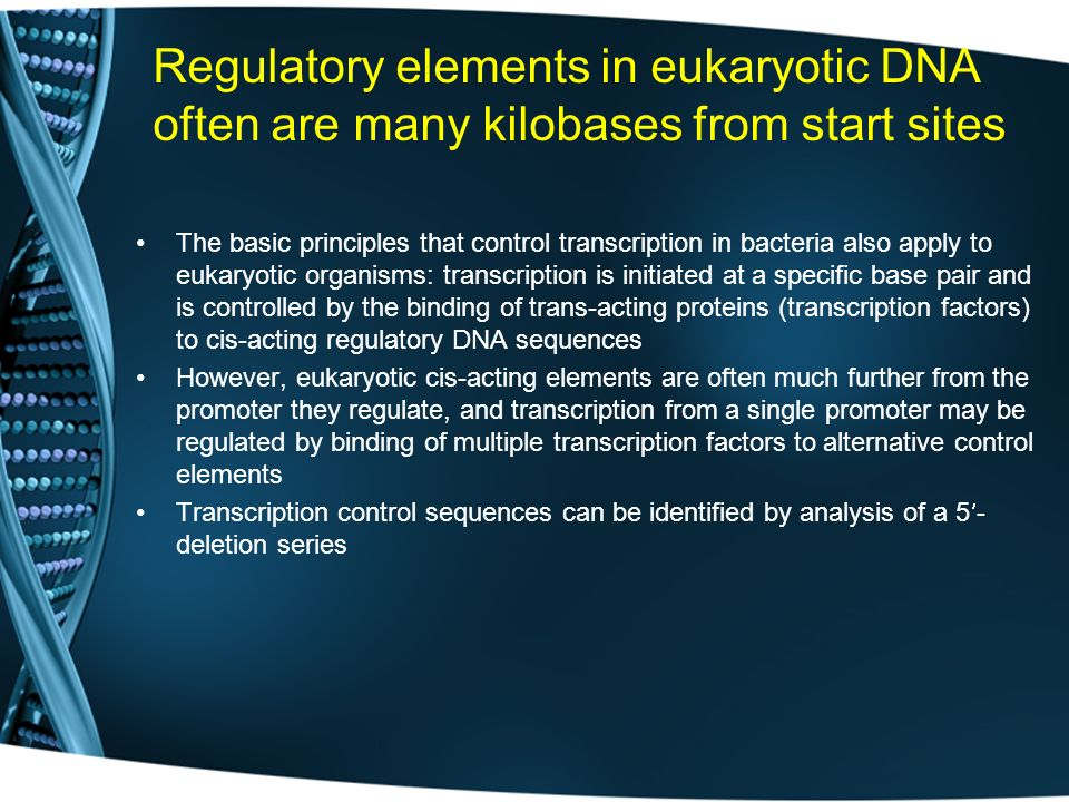 Regulatory elements in eukaryotic DNA often are many kilobases from start sites
