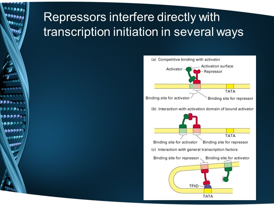 Repressors interfere directly with transcription initiation in several ways