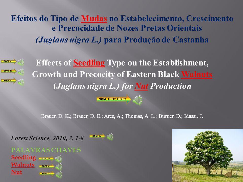 (Juglans nigra L.) para Produção de Castanha