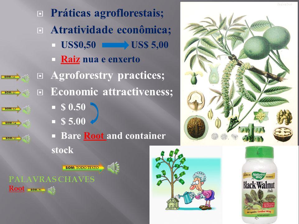 Práticas agroflorestais; Atratividade econômica;