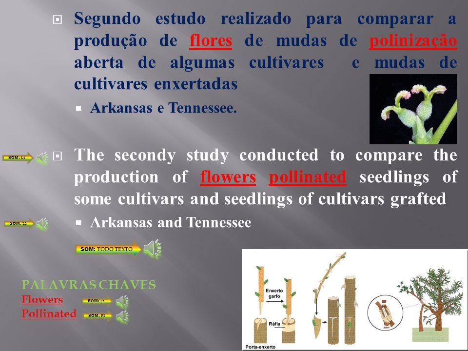 Segundo estudo realizado para comparar a produção de flores de mudas de polinização aberta de algumas cultivares e mudas de cultivares enxertadas