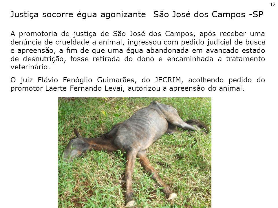 Justiça socorre égua agonizante São José dos Campos -SP