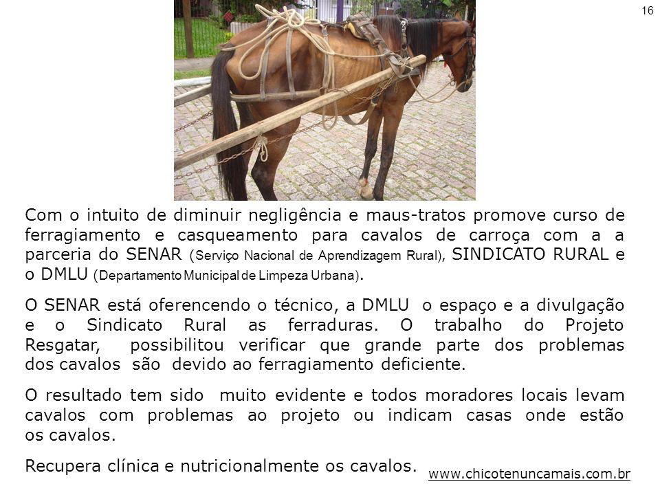 Recupera clínica e nutricionalmente os cavalos.