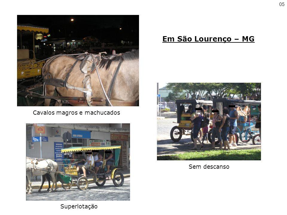 Cavalos magros e machucados
