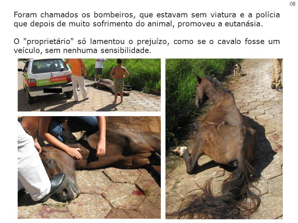 08 Foram chamados os bombeiros, que estavam sem viatura e a polícia que depois de muito sofrimento do animal, promoveu a eutanásia.