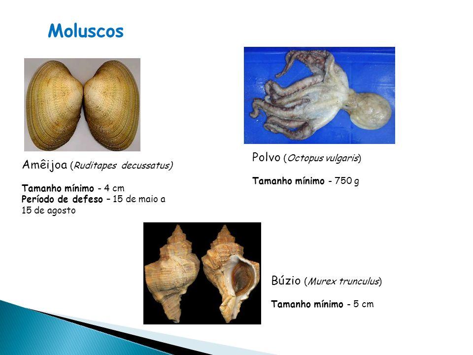 Moluscos Polvo (Octopus vulgaris) Amêijoa (Ruditapes decussatus)