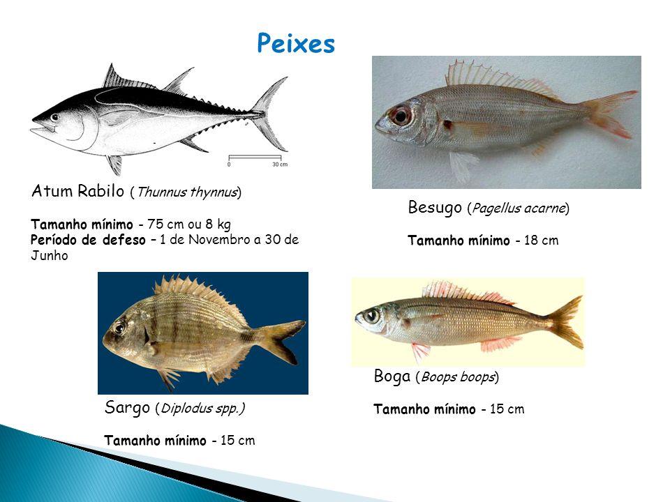 Peixes Atum Rabilo (Thunnus thynnus) Besugo (Pagellus acarne)